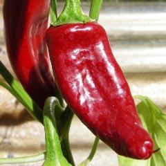 boldog hungarian spice