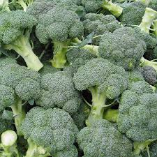 broccoli-early