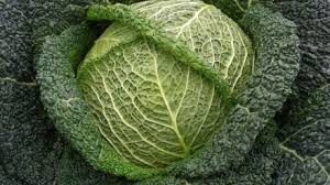 cabbage-savoy
