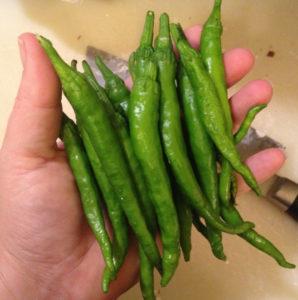 pepper-Fushimi